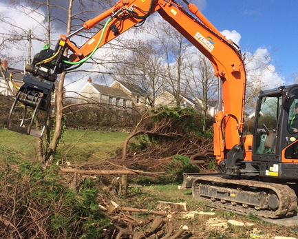 Conifer Tree removal and stump removal